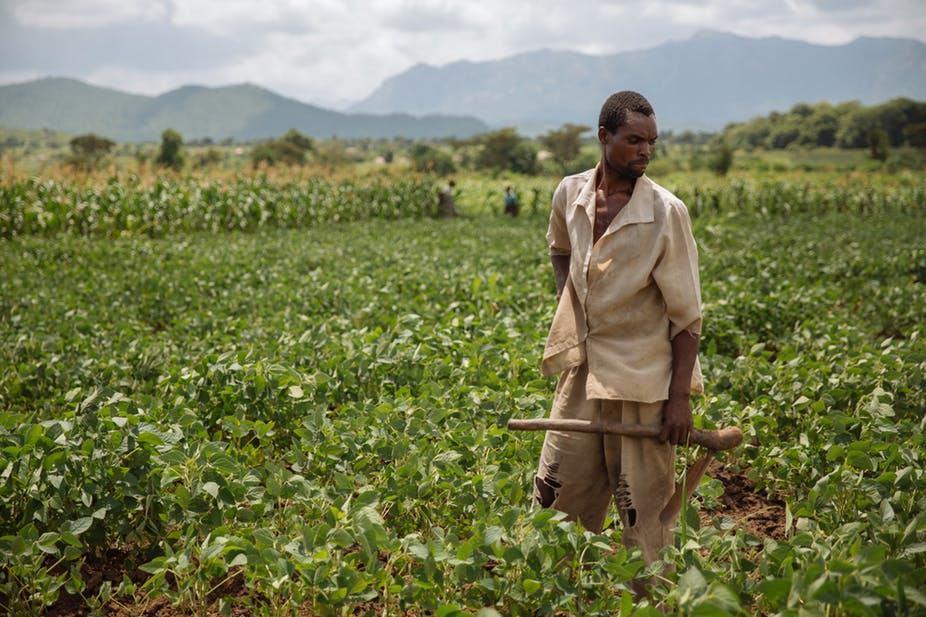 agriculture au togo