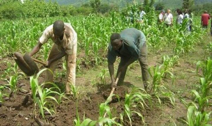 agriculture Bio-Togo