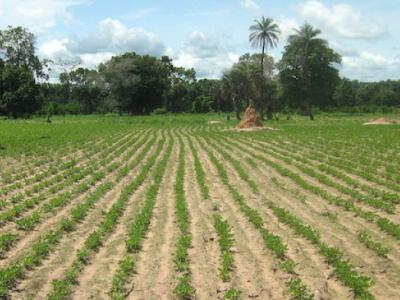 agriculture togo premier employeur